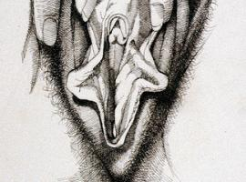 hiddenpenisvulva